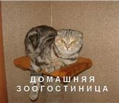 Фотография в Домашние животные Услуги для животных Предлагаем услуги по передержке домашних в Самаре 0