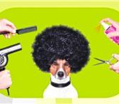 Изображение в Домашние животные Услуги для животных Стрижка и тримминг собак разных пород, любой в Самаре 920