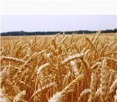 Изображение в Домашние животные Растения ООО «КУБАНЬ АГРО» предлагает к реализации в Краснодаре 14