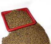 Изображение в Домашние животные Растения Продам на экспорт клевер красный (Trifolium в Москве 0