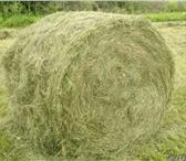 Foto в Домашние животные Корм для животных Продаётся сено 2013 года, 600 рублей за тюк. в Бийске 600