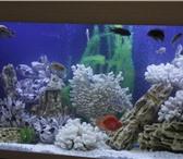 Изображение в Домашние животные Услуги для животных 1.Чистка аквариума, грунта, стекол (внутри в Калуге 3000