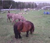 Фотография в Домашние животные Другие животные Продается семья осликов.Семья состоит из:1 в Рязани 50000