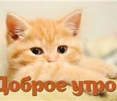 Фото в ? Отдам даром-приму в дар ИЩУ спонсора или благотворительную организацию, в Москве 180000
