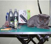 Фото в Домашние животные Услуги для животных Груммер приведет в порядок Вашего любимца в Братске 1000