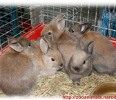 Фотография в Домашние животные Другие животные Комбикорм-концентрат для кроликов (упрощенный)Состав: в Архангельске 400
