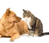 Изображение в Домашние животные Услуги для животных Гостиница   ПУШИСТЫЙ ДРУГ  находится в загородном в Санкт-Петербурге 450