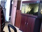 Foto в Домашние животные Товары для животных ОЧЕНЬ СРОЧНО! ПРОДАМ или ОБМЕНЯЮ аквариум в Москве 7000