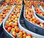 Изображение в Работа Вакансии Для работы на сортировке яблок требуютсяЭто в Липецке 25200