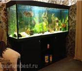 Изображение в Домашние животные Рыбки Мы готовы предложить Вам:- запуск, установка в Туле 0