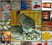 Изображение в Домашние животные Товары для животных Продаем клетки для содержания перепелов, в Казани 0