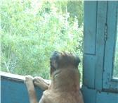 Изображение в Домашние животные Одежда для собак Можно для него одежду у кого есть звоните в Кумертау 1000