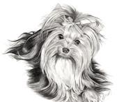 Изображение в Домашние животные Стрижка собак Стрижка собак, модельная, гигиеническая. в Москве 0