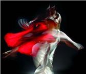 Foto в Спорт Спортивные школы и секции Приглашаем в школу танцев для взрослых, где в Калуге 250