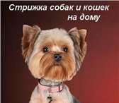 Фотография в Домашние животные Стрижка собак Профессиональный груминг , стрижка , тримминг в Санкт-Петербурге 2000