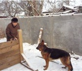 Foto в Домашние животные Услуги для животных Ищу дрессировщика по ОКД,КЗС,  для немецкой в Ейск 5000