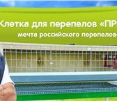 """Фотография в Домашние животные Товары для животных Производитель: Россия, компания """"Большой в Саратове 2600"""