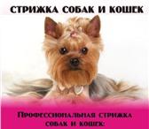 Foto в Домашние животные Стрижка собак Уважаемые владельцы! Хочу предложить Вам в Москве 800