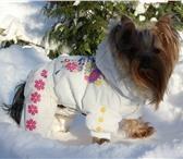 Foto в Домашние животные Одежда для собак Практичный и теплый комбинезон на холодную в Москве 750