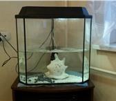 Изображение в Домашние животные Товары для животных Продам аквариум на 50 литров, в шикарном в Москве 4000