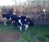 Изображение в Домашние животные Другие животные Овцы,  стадо 300голов стоимостью 6600000, в Челябинске 0