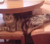 """Изображение в Домашние животные Потерянные Пропал кот по кличке """"Пух"""" в районе Каширы-3 в Кашира 0"""