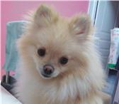 Foto в Домашние животные Услуги для животных Предлагаем услуги догситтера (передержка в Москве 250