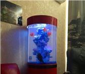 Foto в Домашние животные Рыбки Аквариумный комплекс MARVELOUS 150 л изготовлен в Челябинске 19300