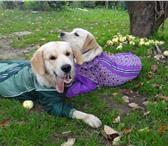 Фото в Домашние животные Товары для животных В нашем магазине Алефтинка можно заказать в Москве 1200
