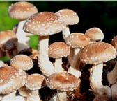 Изображение в Домашние животные Растения Уникальный комплект посадочного материала в Видном 1320