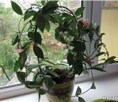 Изображение в Домашние животные Растения Любителям редких и тропических растений! в Таганроге 500
