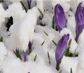 Фотография в Красота и здоровье Косметические услуги Ура! Скоро весна!Самое время подготовиться в Самаре 0