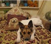 Foto в Домашние животные Найденные 18 июля 2010 года в районе улиц чехова тотмина в Тосно 0