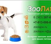 Foto в Домашние животные Корм для животных Интернет-магазин зоотоваров. С Доставкой в Новосибирске 0