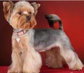 Foto в Домашние животные Услуги для животных Опытный парикмахер приедет к Вам на дом (Строгино, в Москве 0