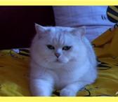 Изображение в Домашние животные Услуги для животных Для получения высококачественного потомства в Таганроге 0