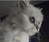 Изображение в Домашние животные Найденные В районе  Шереметев парк-отеля была найдена в Иваново 0