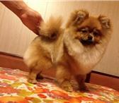 Фотография в Домашние животные Услуги для животных Предлагаем услуги по уходу за шерстью животных в Владимире 0