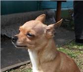Foto в Домашние животные Потерянные 31 мая в районе посёлка Желнино потерялся в Дзержинске 10