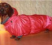 Фото в Домашние животные Одежда для собак Продается одежда и обувь для собак! Чихуахуа, в Калуге 600