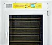 Изображение в Домашние животные Товары для животных Инкубатор ЧарлиПолностью автоматизированный в Тольятти 55000