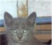 Изображение в Домашние животные Корм для животных Семейство кошачьих - это удивительный вид в Ейск 1