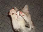 Изображение в Домашние животные Товары для животных Антицарапки- это защитные колпачки, которые в Иркутске 500