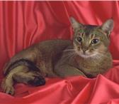 Фотография в Домашние животные Услуги для животных Профессиональные  фотосессии  кошек  и  небольших в Тюмени 2000